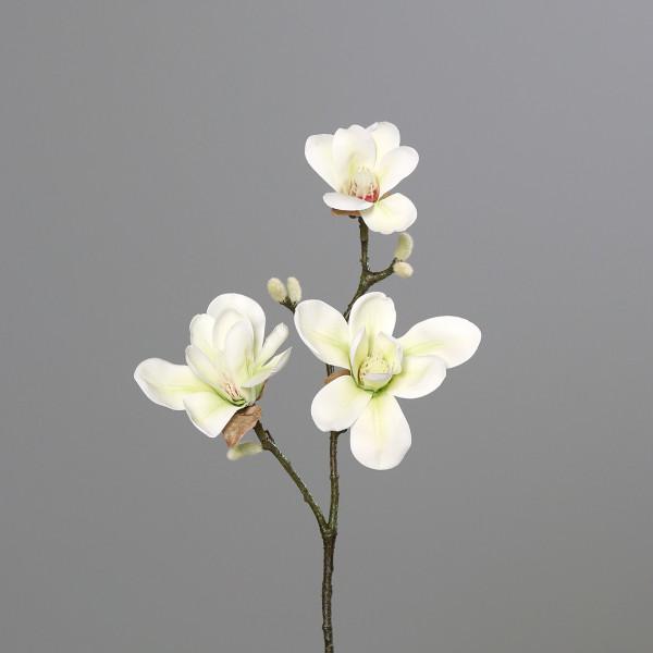 Magnolien, 40cm