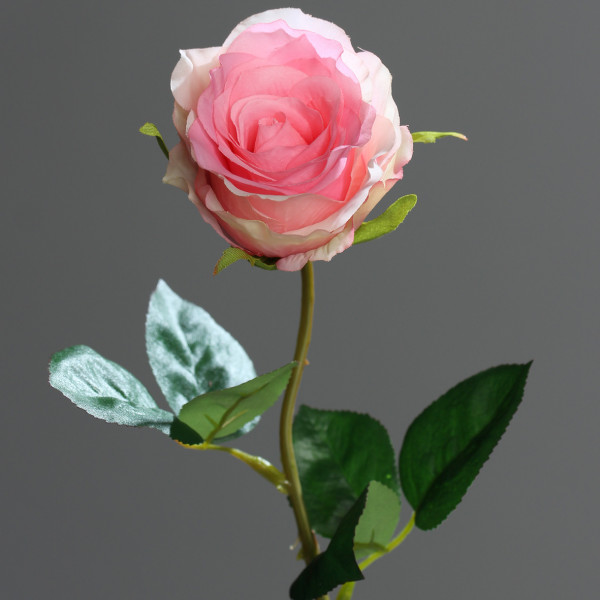 Rose, 48cm