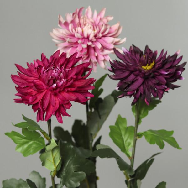 Chrysantheme, 72cm
