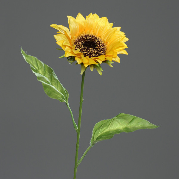 Sonnenblume, 65cm